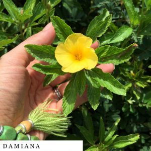 organic-herbal-smoke-tea-damiana
