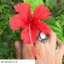 organic-herbal-smoke-tea-hibiscus