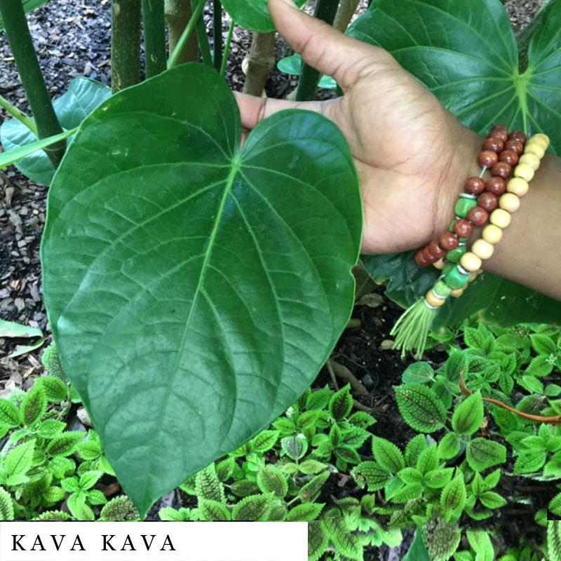 ... Herbal Blend   Natural Aphrodisiac   DroppingSeeds™ Herbal Smoke