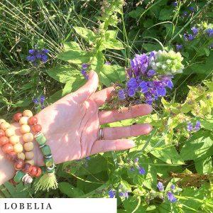 organic-herbal-smoke-tea-lobelia