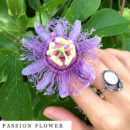 organic-herbal-smoke-tea-passion-flower
