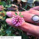 organic-herbal-smoke-tea-red-clover