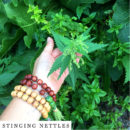 organic-herbal-smoke-tea-stinging-nettles