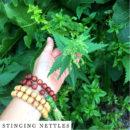 organic-herbal-smoke-tea-stinging-nettles