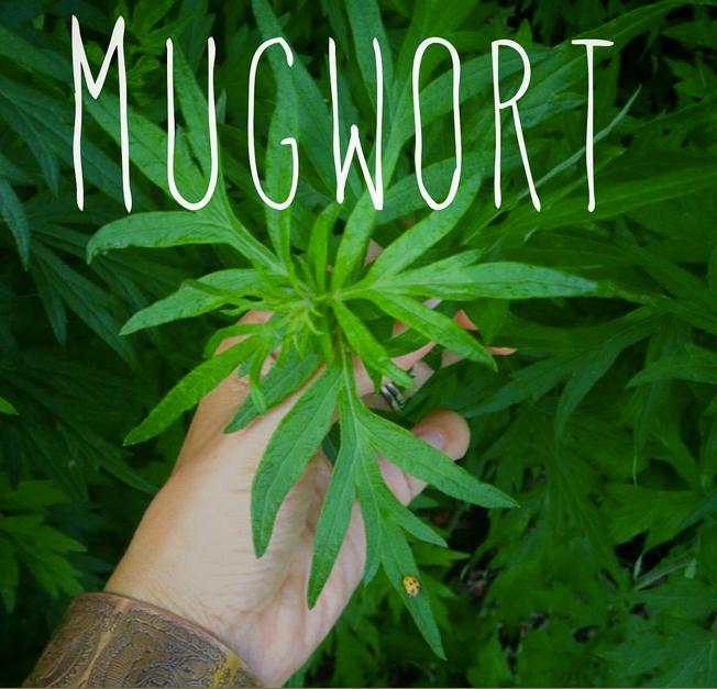 Smoking Mugwort Herbal Blend